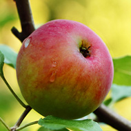 Year-round Fruits Apples