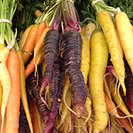Year-round Vegetables Carrots